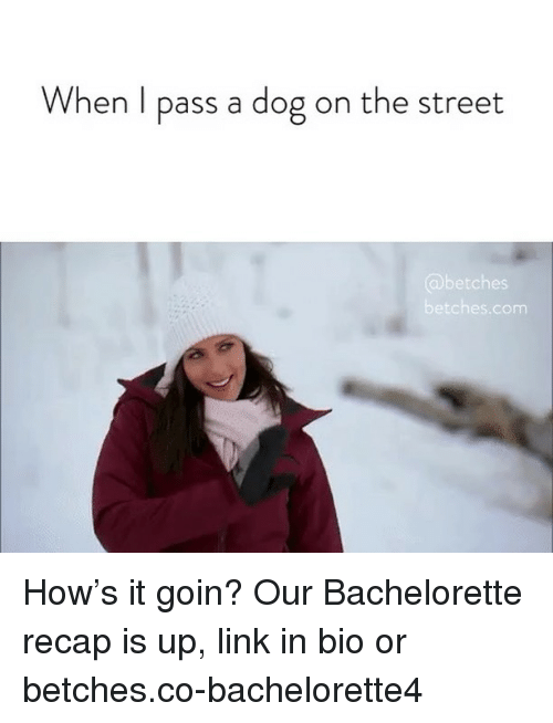 Bachelorette: When l pass a dog on the street  etches  etches.com How's it goin? Our Bachelorette recap is up, link in bio or betches.co-bachelorette4