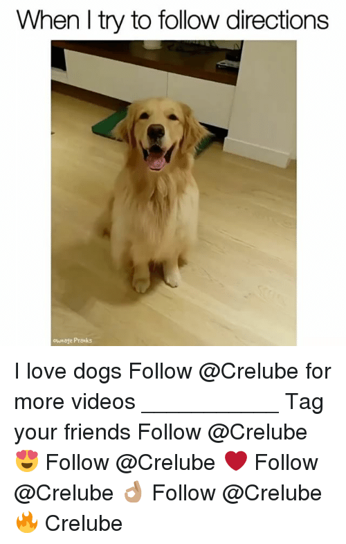 Dogs, Friends, and Love: When l try to follow directions  our e Pranks I love dogs Follow @Crelube for more videos ___________ Tag your friends Follow @Crelube 😍 Follow @Crelube ❤ Follow @Crelube 👌🏽 Follow @Crelube 🔥 Crelube
