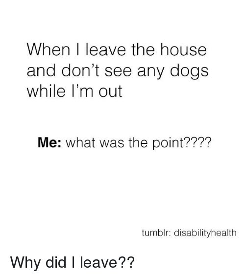 memes: When leave the house  and don't see any dogs  while I'm out  Me: what was the point????  tumblr: disabilityhealth Why did I leave??