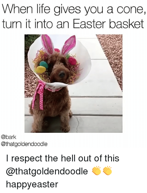 goldendoodle: When life gives you a cone,  turn it into an Easter basket  @bark  @that goldendoodle I respect the hell out of this @thatgoldendoodle 👏👏 happyeaster