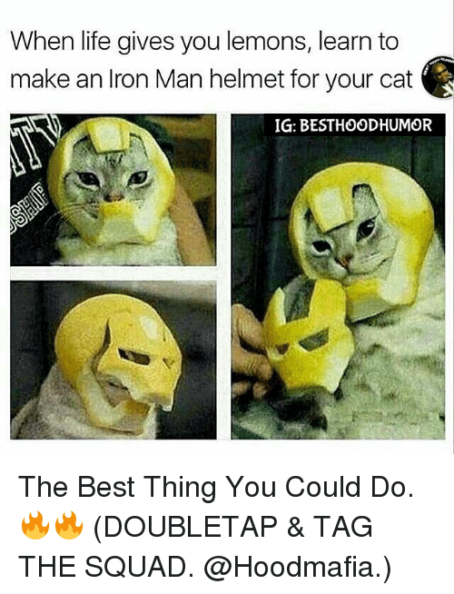 Iron Man, Memes, and 🤖: When life gives you lemons, learn to  make an Iron Man helmet for your cat  IG: BESTHOODHUMOR The Best Thing You Could Do. 🔥🔥 (DOUBLETAP & TAG THE SQUAD. @Hoodmafia.)