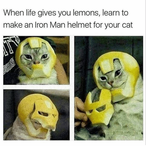 Iron Man, Memes, and 🤖: When life gives you lemons, learn to  make an Iron Man helmet for your cat