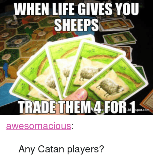 "sheeps: WHEN LIFE GIVES YOU  SHEEPS  TRADETHEM 4 FOR-1 <p><a href=""http://awesomacious.tumblr.com/post/170227189715/any-catan-players"" class=""tumblr_blog"">awesomacious</a>:</p>  <blockquote><p>Any Catan players?</p></blockquote>"