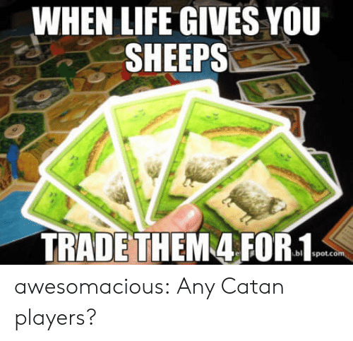 sheeps: WHEN LIFE GIVES YOU  SHEEPS  TRADETHEM 4 FOR-1 awesomacious:  Any Catan players?