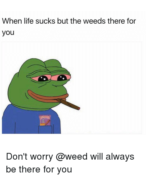 Memes, Being There, and 🤖: When life sucks but the weeds there for  you Don't worry @weed will always be there for you