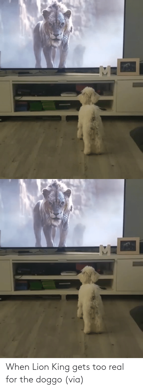 real: When Lion King gets too real for the doggo (via)