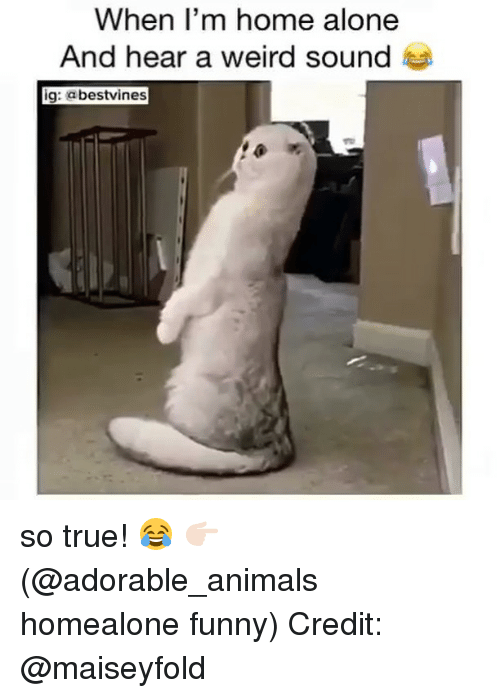 Being Alone, Animals, and Funny: When l'm home alone  nd hear a weird sounde  ig: abestvines so true! 😂 👉🏻(@adorable_animals homealone funny) Credit: @maiseyfold