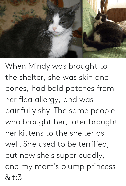 Princess: When Mindy was brought to the shelter, she was skin and bones, had bald patches from her flea allergy, and was painfully shy. The same people who brought her, later brought her kittens to the shelter as well. She used to be terrified, but now she's super cuddly, and my mom's plump princess <3