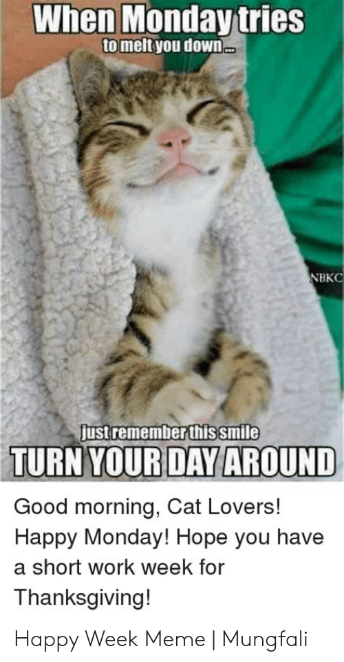 Short Work Week: When Monday tries  to melt you down  NBKC  justremember thissmile  TURN YOURDAY AROUND  Good morning, Cat Lovers!  Happy Monday! Hope you have  a short work week for  Thanksgiving! Happy Week Meme | Mungfali