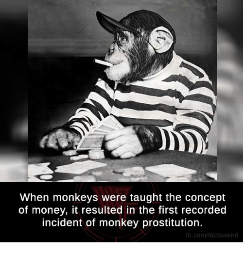 prostitutes: When monkeys were taught the concept  of money, it resulted in the first recorded  incident of monkey prostitution.  fb.com/facts Weird