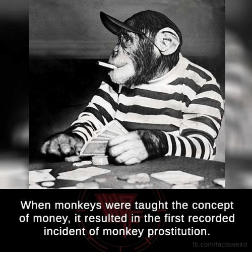 prostitutes: When monkeys were taught the concept  of money, it resulted in the first recorded  incident of monkey prostitution.  fb.com/factsweird