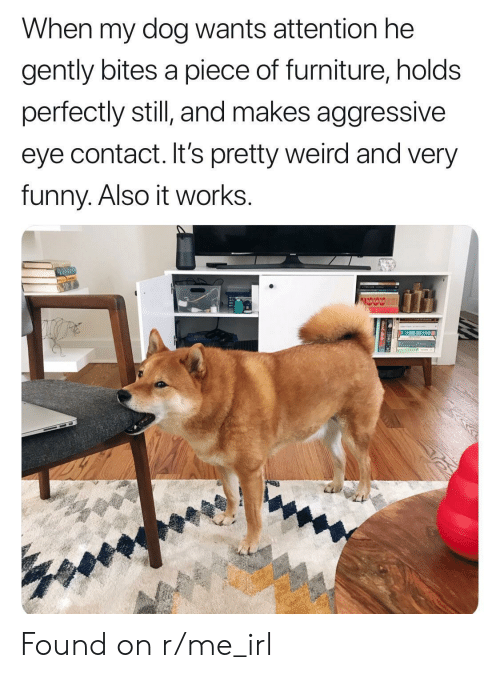 R Me Irl: When my dog wants attention he  gently bites a piece of furniture, holds  perfectly still and makes aggressive  eye contact. It's pretty weird and very  funny. Also it works. Found on r/me_irl