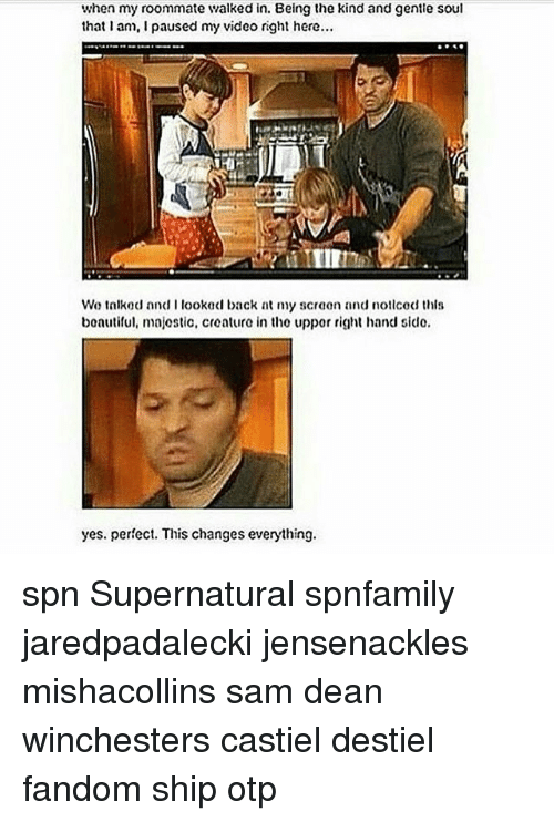 Majesticity: when my roommate walked in. Being the kind and gentle soul  that an, i paused my video right here...  We talked and I looked back at ny screen and nollcod this  boautiful, majestic, creature in the uppor right hand sido.  yes. perfect. This changes everything. spn Supernatural spnfamily jaredpadalecki jensenackles mishacollins sam dean winchesters castiel destiel fandom ship otp