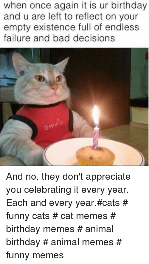 Bad Decisions: when once again it is ur birthday  and u are left to reflect on your  empty existence full of endless  failure and bad decisions And no, they don't appreciate you celebrating it every year. Each and every year.#cats # funny cats # cat memes # birthday memes # animal birthday # animal memes # funny memes