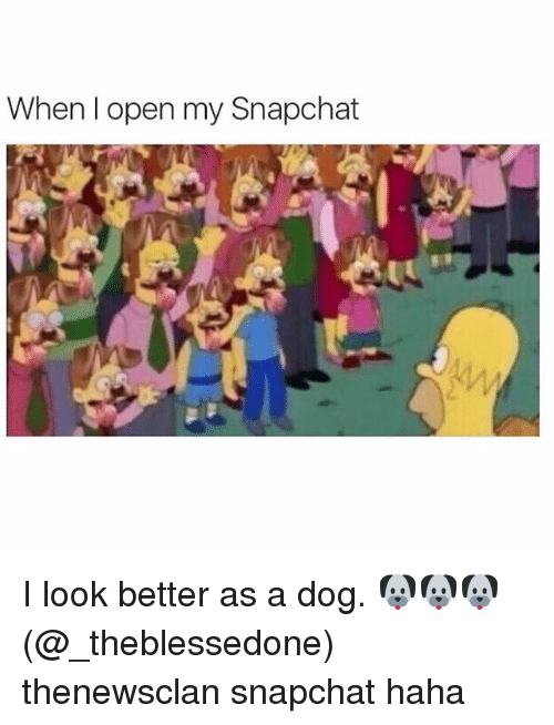 Dogs, Snapchat, and Girl Memes: When open my Snapchat I look better as a dog. 🐶🐶🐶(@_theblessedone) thenewsclan snapchat haha