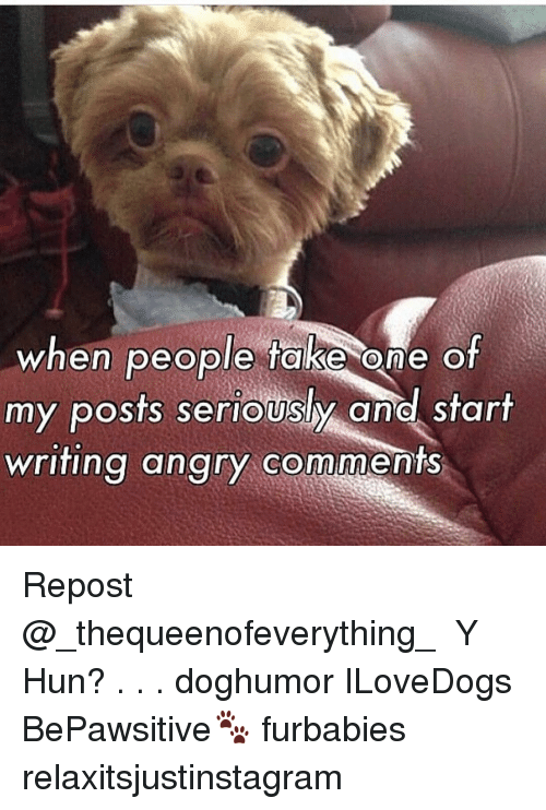Ÿ˜': when people take one of  my posts seriously and start  writing angry comm Repost @_thequeenofeverything_ ・・・ Y Hun? . . . doghumor ILoveDogs BePawsitive🐾 furbabies relaxitsjustinstagram