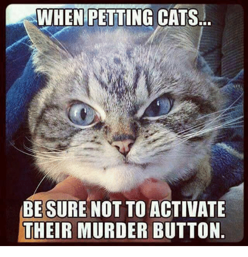 When: WHEN PETTING CATS...  BE SURE NOT TO ACTIVATE  THEIR MURDER BUTTON