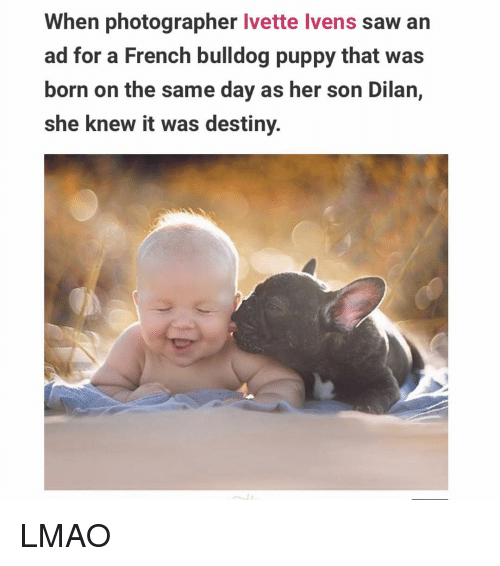 french bulldog: When photographer  Ivette lvens saw an  ad for a French bulldog puppy that was  born on the same day as her son Dilan,  she knew it was destiny. LMAO