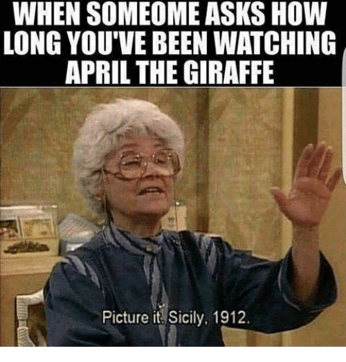 Giraffe, April, and Asks: WHEN SOMEOME ASKS HOW  LONG YOU'VE BEENWATCHING  APRIL THE GIRAFFE  Picture it Sicily, 1912.