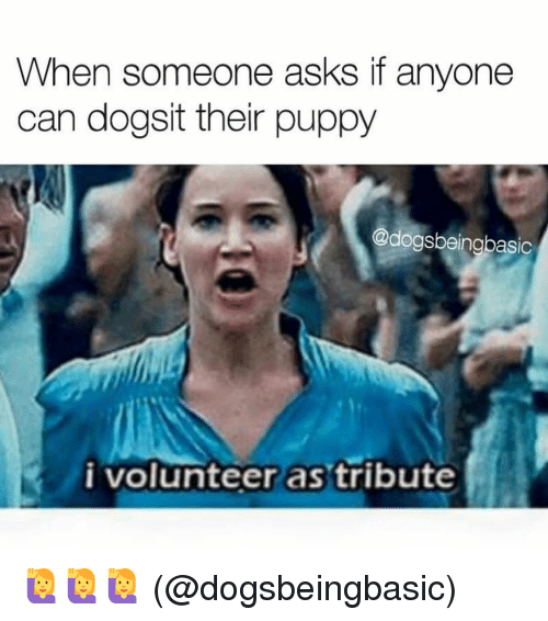 Tribution: When someone asks if anyone  can dogsit their puppy  @dogsbeingbasic  i volunteer as tribute 🙋🙋🙋 (@dogsbeingbasic)