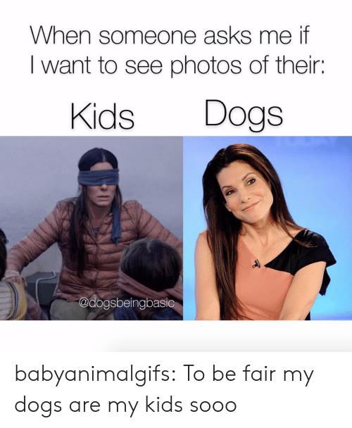 i want to see: When someone asks me if  I want to see photos of their:  Kids Dogs  @dogsbeingbasic babyanimalgifs:  To be fair my dogs are my kids sooo