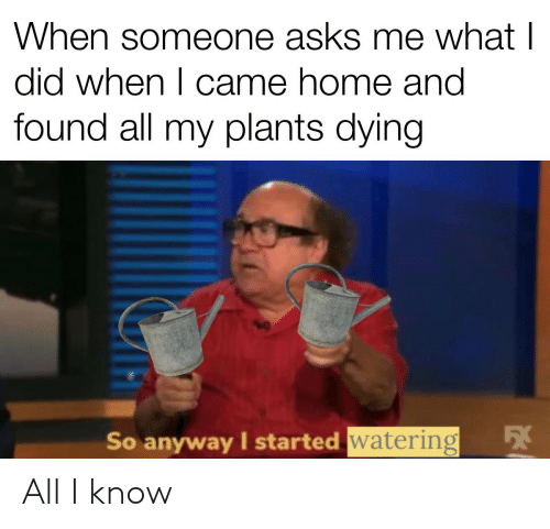 plants: When someone asks me what I  did when I came home and  found all my plants dying  54  So anyway I started watering All I know