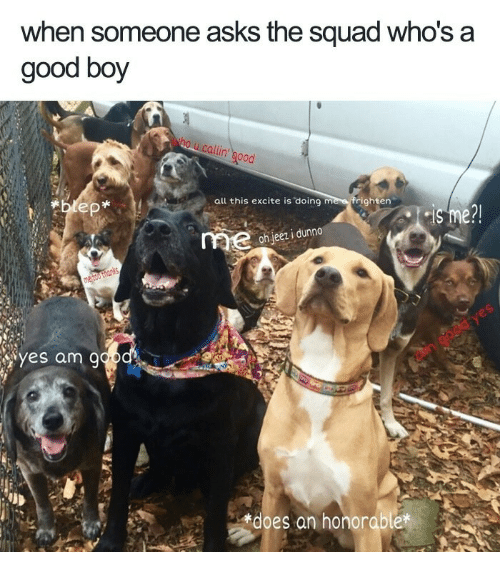Squad, Excite, and Good: when someone asks the squad who's a  good boy  all this excite is doing me e frighten  oh jeez i dunno  yes am 9  does an honorable