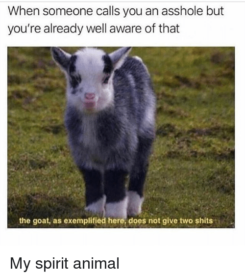 Memes, Goat, and Animal: When someone calls you an asshole but  you're already well aware of that  the goat, as exemplified here does not give two shits i My spirit animal