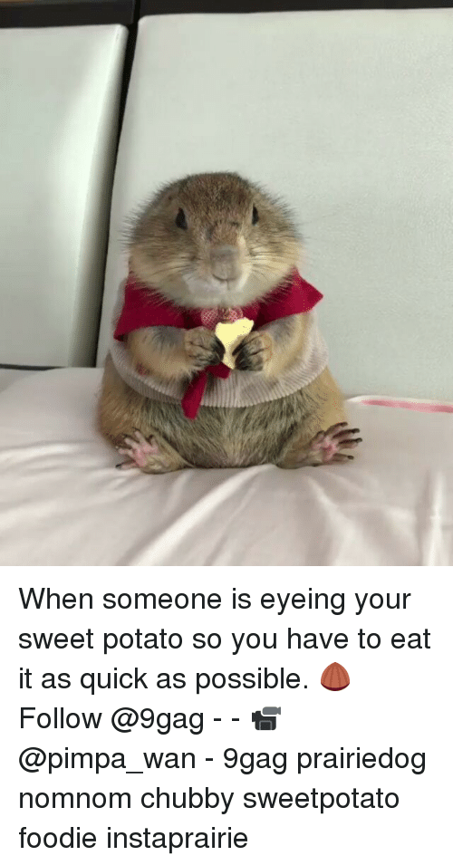 9gag, Memes, and Potato: When someone is eyeing your sweet potato so you have to eat it as quick as possible. 🌰Follow @9gag - - 📹@pimpa_wan - 9gag prairiedog nomnom chubby sweetpotato foodie instaprairie