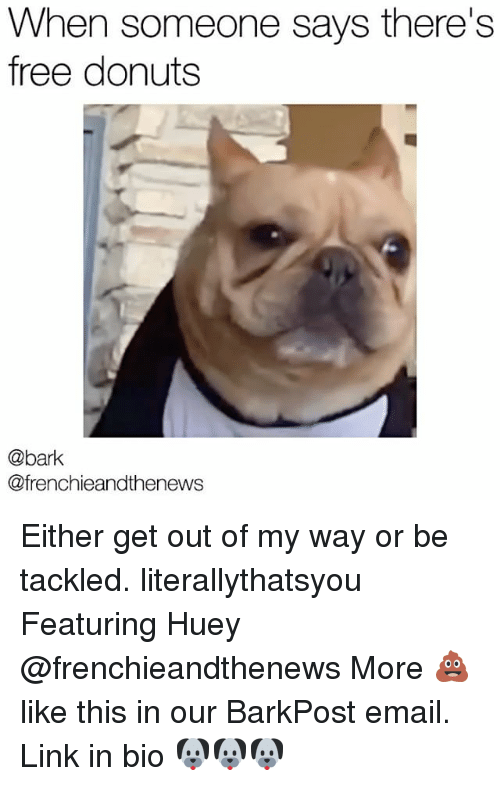 Memes, Donuts, and Email: When someone says there's  free donuts  @bark  @frenchieandthenews Either get out of my way or be tackled. literallythatsyou Featuring Huey @frenchieandthenews More 💩like this in our BarkPost email. Link in bio 🐶🐶🐶