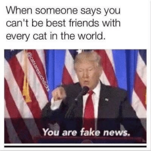 Fake News: When someone says you  can't be best friends with  every cat in the world.  You are fake news.  aresuchdicks