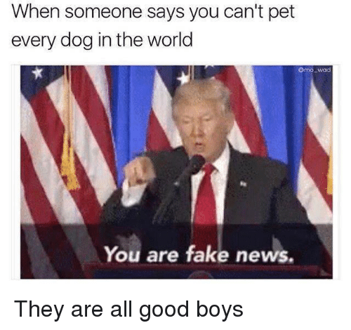 Fake, Memes, and News: When someone says you can't pet  every dog in the world  Como wad  You are fake news. They are all good boys