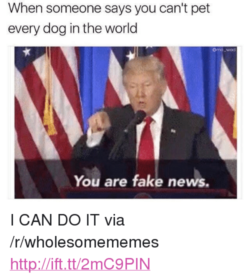 "Fake, News, and Http: When someone says you can't pet  every dog in the world  mo_wad  You are fake news. <p>I CAN DO IT via /r/wholesomememes <a href=""http://ift.tt/2mC9PIN"">http://ift.tt/2mC9PIN</a></p>"