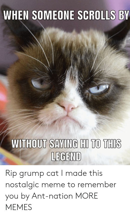 scrolls: WHEN SOMEONE SCROLLS BY  WITHOUT SAVING HIL TO THIS  LEGEND Rip grump cat I made this nostalgic meme to remember you by Ant-nation MORE MEMES