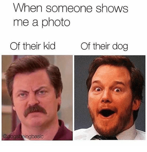 Dank, 🤖, and Dog: When someone shows  me a photo  Of their kid  Of their dog  @dogsbeingbasic