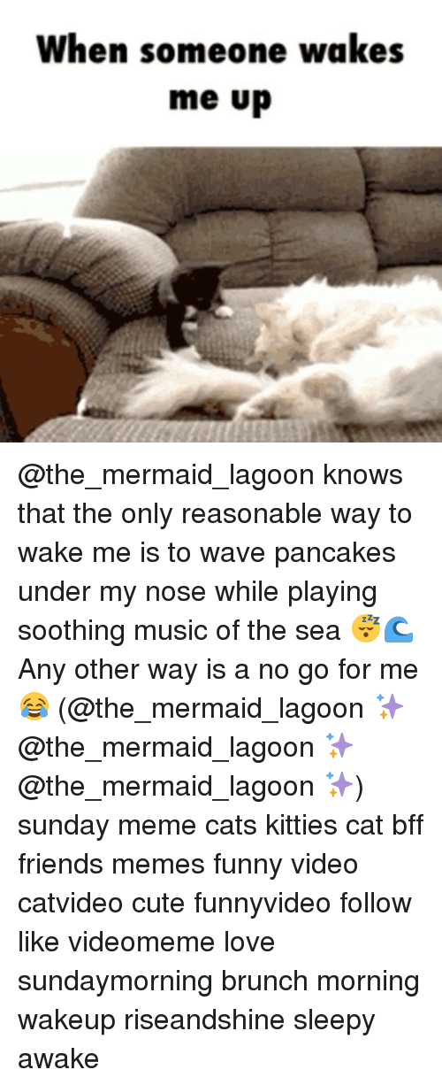 Sunday Meme: When someone wakes  me up @the_mermaid_lagoon knows that the only reasonable way to wake me is to wave pancakes under my nose while playing soothing music of the sea 😴🌊 Any other way is a no go for me 😂 (@the_mermaid_lagoon ✨ @the_mermaid_lagoon ✨ @the_mermaid_lagoon ✨) sunday meme cats kitties cat bff friends memes funny video catvideo cute funnyvideo follow like videomeme love sundaymorning brunch morning wakeup riseandshine sleepy awake