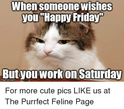 Work Saturday: When someone wishes  you Happy Friday  nngflip.com  work Saturday For more cute pics LIKE us at The Purrfect Feline Page