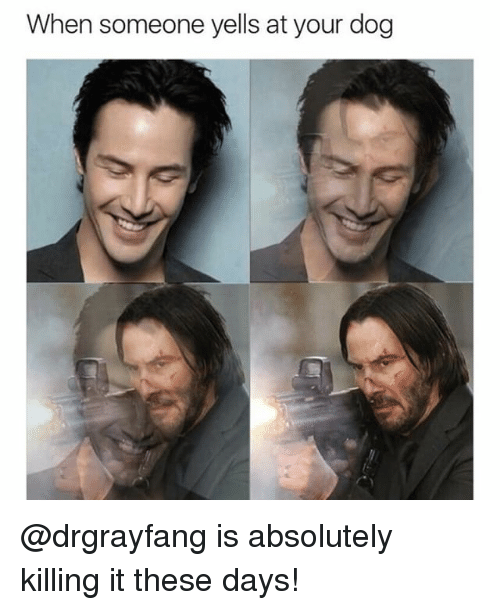 Memes, 🤖, and Dog: When someone yells at your dog @drgrayfang is absolutely killing it these days!