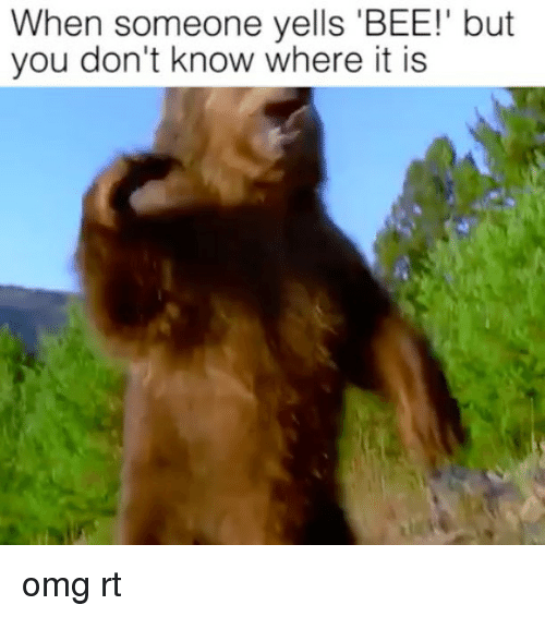 Omg, Bee, and You: When someone yells 'BEE!' but  you don't know where it is omg rt