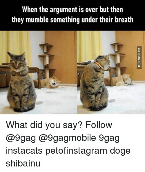 what did you say: When the argument is over but then  they mumble something under their breath What did you say? Follow @9gag @9gagmobile 9gag instacats petofinstagram doge shibainu