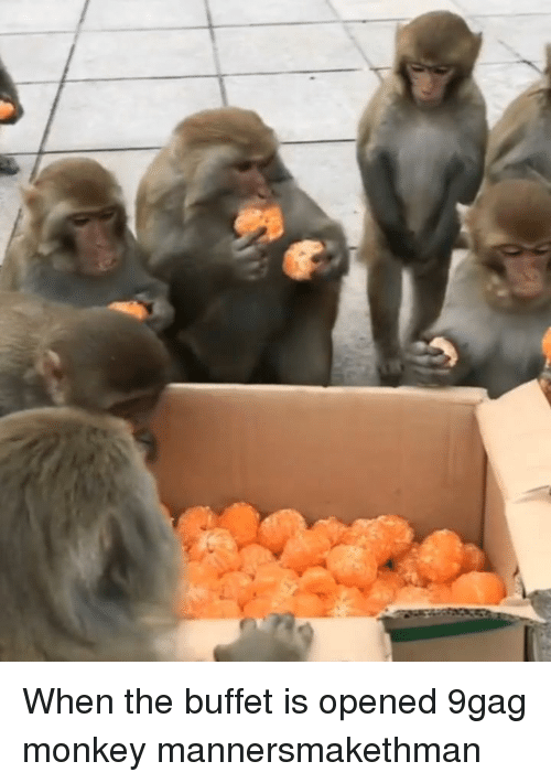 The Buffet: When the buffet is opened 9gag monkey mannersmakethman