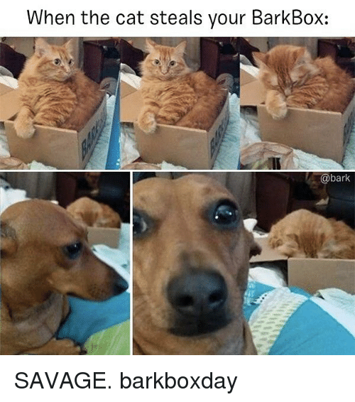 Memes, Savage, and 🤖: When the cat steals your BarkBox:  @bark SAVAGE. barkboxday