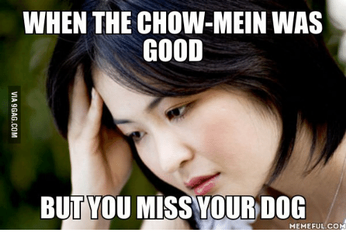 Good Chinese Food But You Miss Your Dog