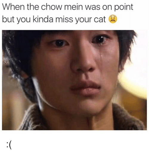 Dank Memes: When the chow mein was on point  but you kinda miss your cat :(