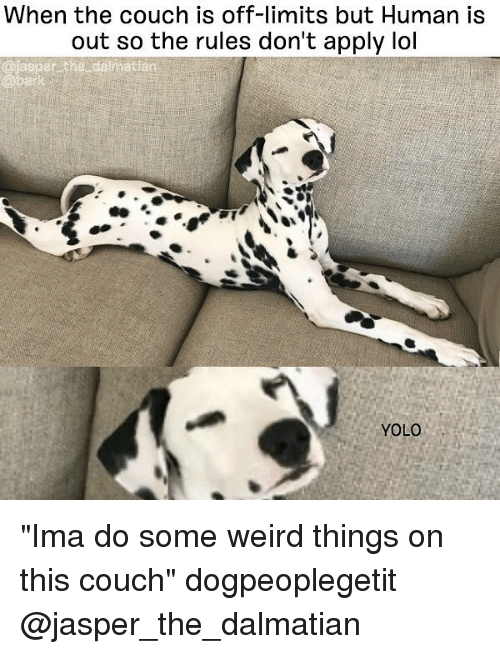 "YOLO: When the couch is off-limits but Human is  out so the rules don't apply lol  sper the  atlan  se.  YOLO ""Ima do some weird things on this couch"" dogpeoplegetit @jasper_the_dalmatian"