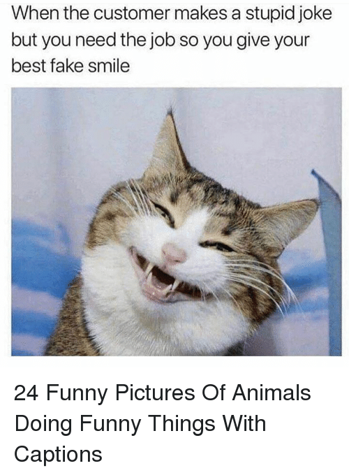 Stupid Joke: When the customer makes a stupid joke  but you need the job so you give your  best fake smile 24 Funny Pictures Of Animals Doing Funny Things With Captions