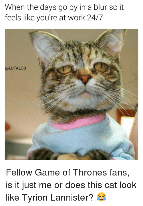 Cats, Memes, and Work: When the days go by in a blur so it  feels like you're at work 24/7  (a)LUTAL08 Fellow Game of Thrones fans, is it just me or does this cat look like Tyrion Lannister? 😂