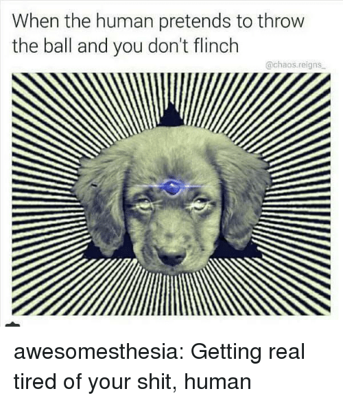 Shit, Tumblr, and Blog: When the human pretends to throw  the ball and you don't flinch  @chaos.reigns awesomesthesia:  Getting real tired of your shit, human