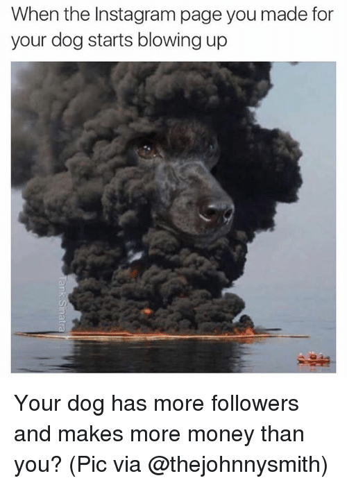 Funny, Instagram, and Money: When the Instagram page you made for  your dog starts blowing up  5 Your dog has more followers and makes more money than you? (Pic via @thejohnnysmith)
