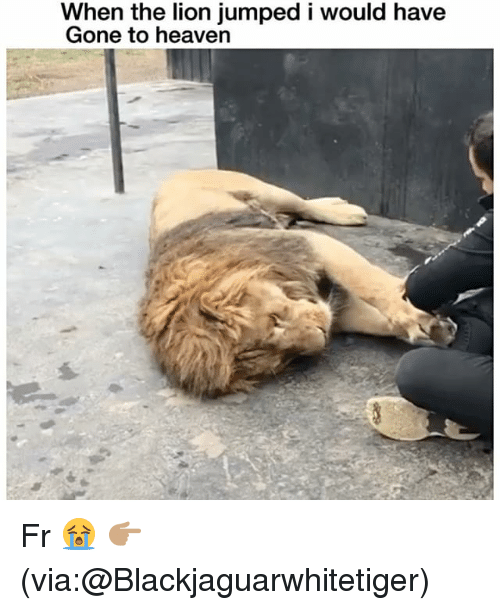Funny, Heaven, and Lion: When the lion jumped i would have  Gone to heaven Fr 😭 👉🏽(via:@Blackjaguarwhitetiger)